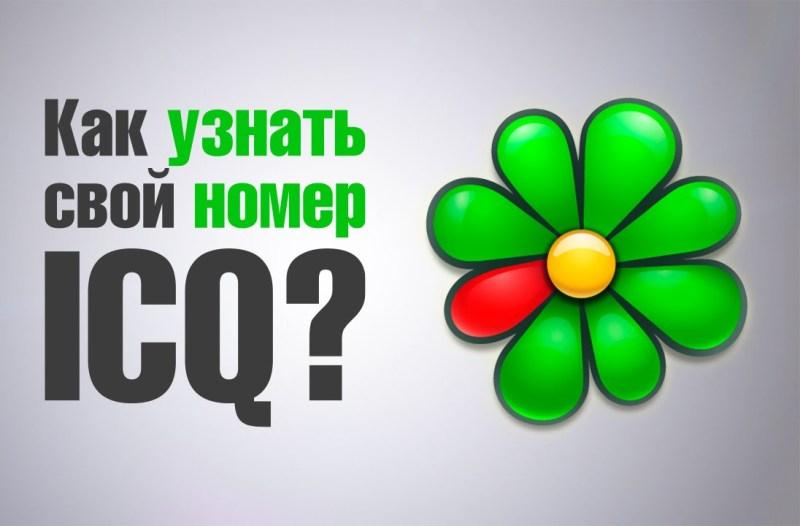 как узнать свой номер ICQ